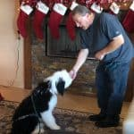 Dog Training Tucson