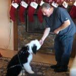 Dog Training Tucson